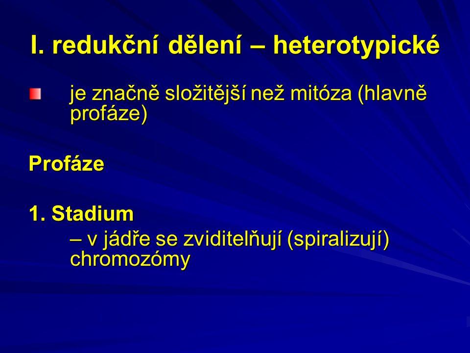 I. redukční dělení – heterotypické je značně složitější než mitóza (hlavně profáze) Profáze 1.