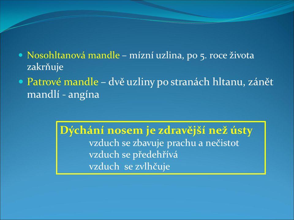 Nosohltanová mandle – mízní uzlina, po 5.