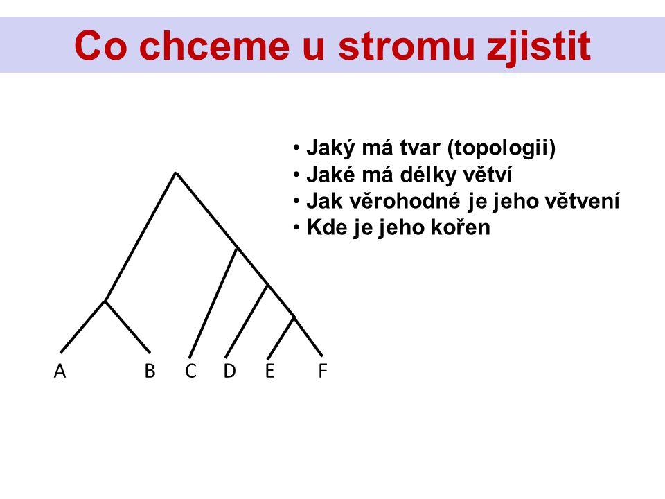 ABCDEF Jaký má tvar (topologii) Jaké má délky větví Jak věrohodné je jeho větvení Kde je jeho kořen Co chceme u stromu zjistit?Co chceme u stromu zjistit