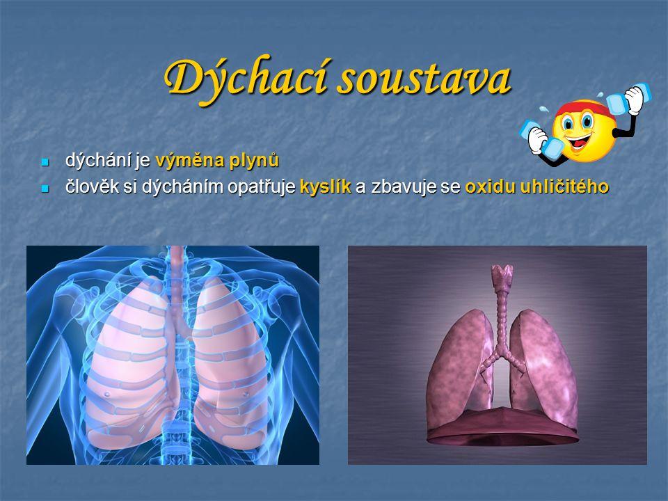 dýchání je výměna plynů dýchání je výměna plynů člověk si dýcháním opatřuje kyslík a zbavuje se oxidu uhličitého člověk si dýcháním opatřuje kyslík a