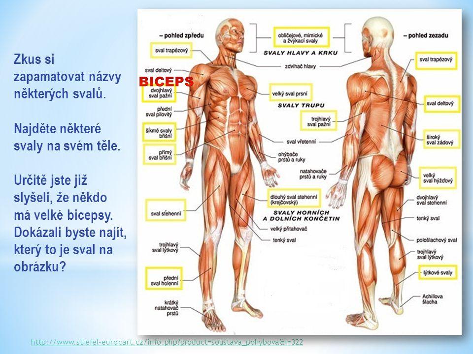 http://www.stiefel-eurocart.cz/info.php?product=soustava_pohybova&i=322 Zkus si zapamatovat názvy některých svalů.