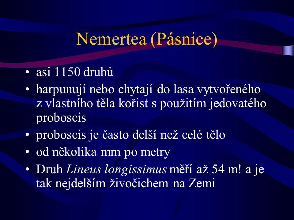 Nemertea (Pásnice) asi 1150 druhů harpunují nebo chytají do lasa vytvořeného z vlastního těla kořist s použitím jedovatého proboscis proboscis je často delší než celé tělo od několika mm po metry Druh Lineus longissimus měří až 54 m.