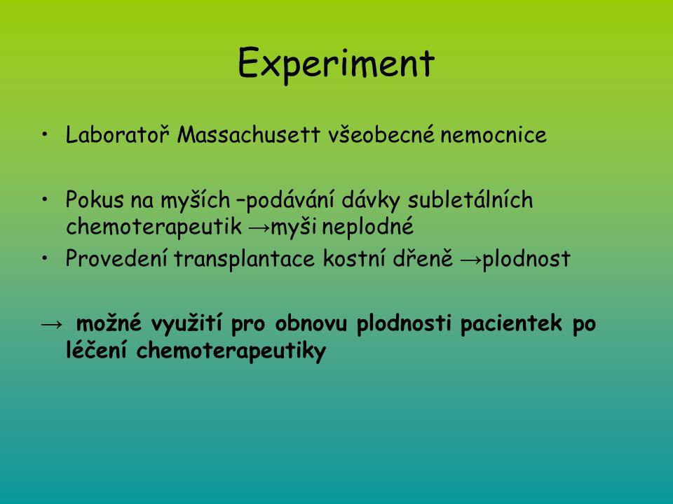 Experiment Laboratoř Massachusett všeobecné nemocnice Pokus na myších –podávání dávky subletálních chemoterapeutik → myši neplodné Provedení transplan