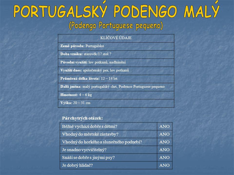 KLÍČOVÉ ÚDAJE Země původu: Portugalsko Doba vzniku: starověk/17.stol.? Původní využití: lov potkanů, nadhánění Využití dnes: společenský pes, lov potk