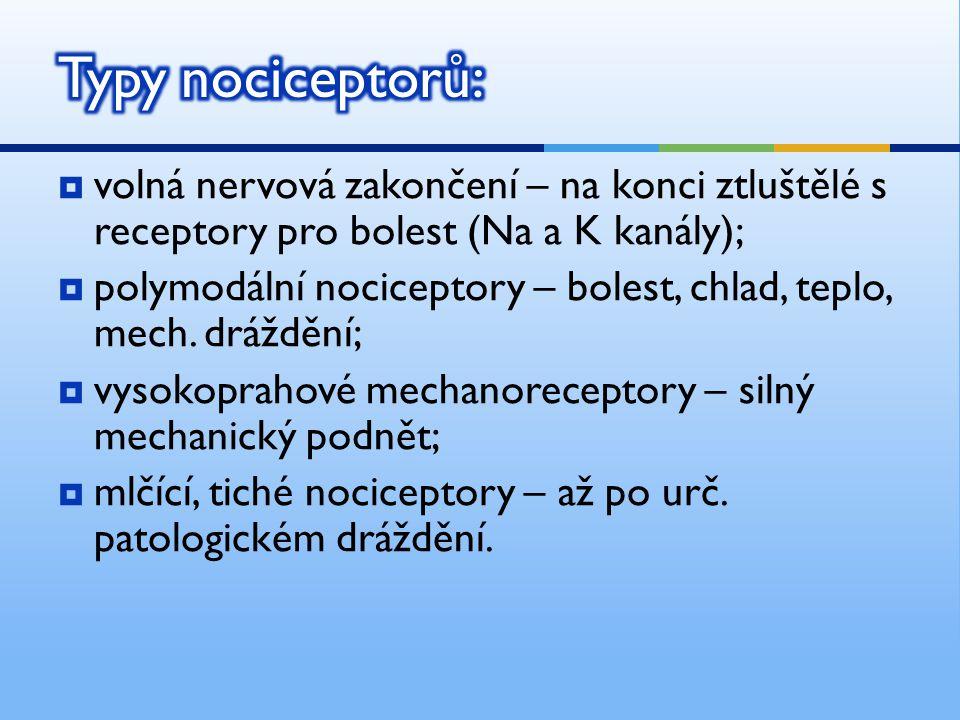 volná nervová zakončení – na konci ztluštělé s receptory pro bolest (Na a K kanály);  polymodální nociceptory – bolest, chlad, teplo, mech.