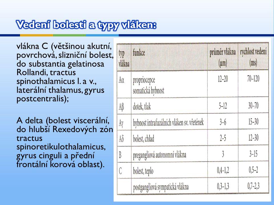 vlákna C (většinou akutní, povrchová, slizniční bolest, do substantia gelatinosa Rollandi, tractus spinothalamicus l.