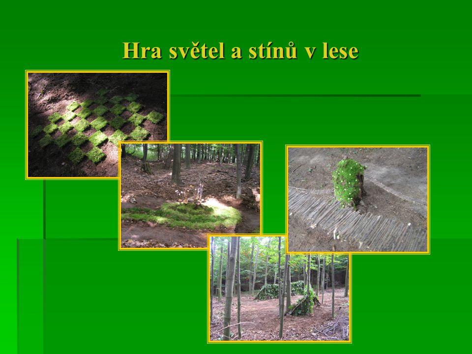 Hra světel a stínů v lese