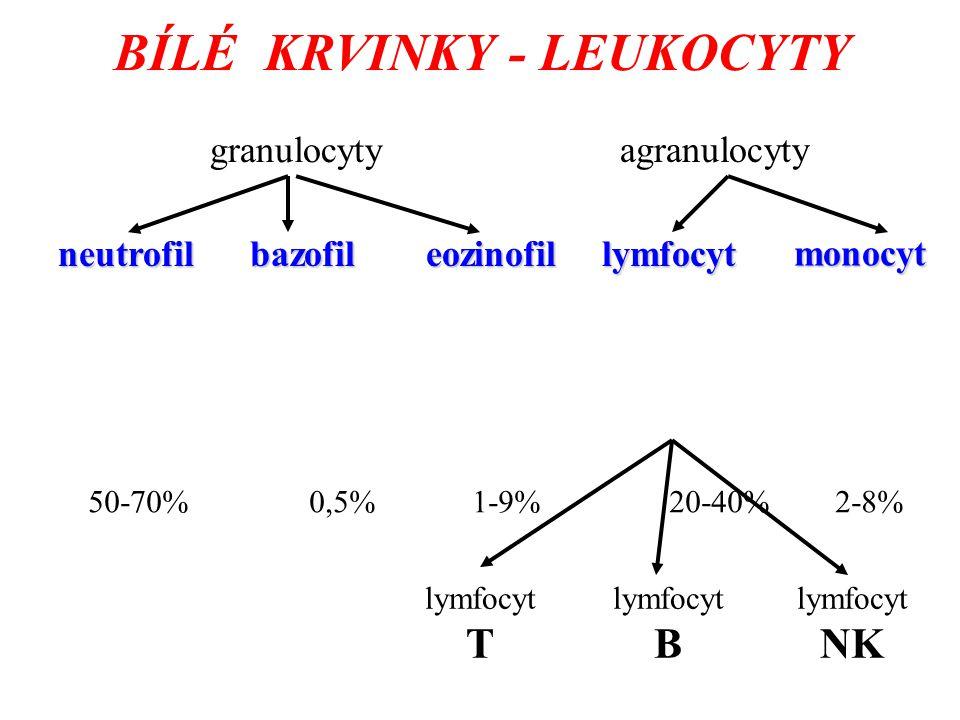 BÍLÉ KRVINKY - LEUKOCYTY granulocyty agranulocyty neutrofilbazofileozinofil lymfocyt T lymfocyt B lymfocyt NK monocyt lymfocyt 50-70% 0,5% 1-9% 20-40% 2-8%