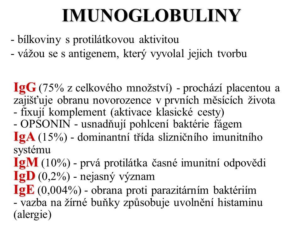 IMUNOGLOBULINY - bílkoviny s protilátkovou aktivitou - vážou se s antigenem, který vyvolal jejich tvorbu IgG IgG (75% z celkového množství) - prochází placentou a zajišťuje obranu novorozence v prvních měsících života - fixují komplement (aktivace klasické cesty) - OPSONIN - usnadňují pohlcení baktérie fágem IgA IgA (15%) - dominantní třída slizničního imunitního systému IgM IgM (10%) - prvá protilátka časné imunitní odpovědi IgD IgD (0,2%) - nejasný význam IgE IgE (0,004%) - obrana proti parazitárním baktériím - vazba na žírné buňky způsobuje uvolnění histaminu (alergie)