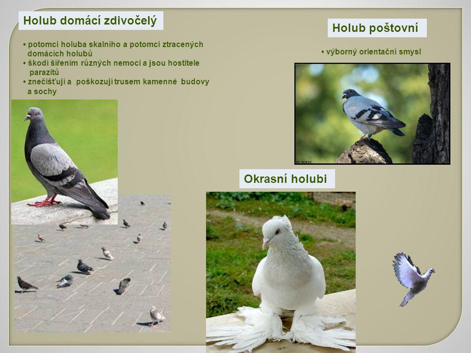 Holub domácí zdivočelý potomci holuba skalního a potomci ztracených domácích holubů škodí šířením různých nemoci a jsou hostitele parazitů znečišťují