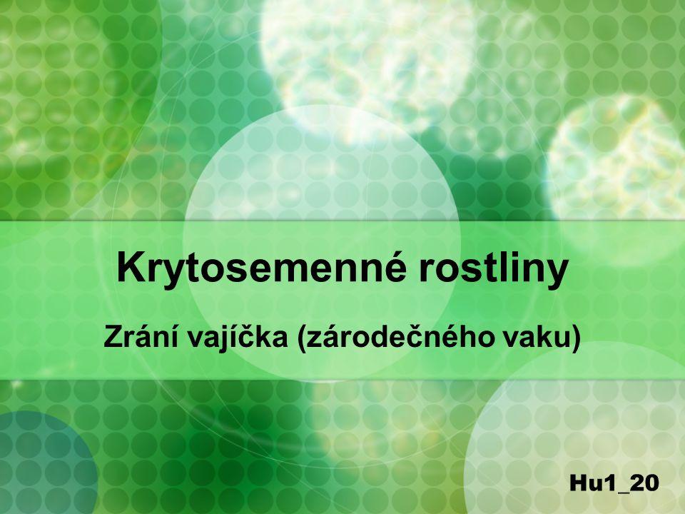Krytosemenné rostliny Zrání vajíčka (zárodečného vaku) Hu1_20