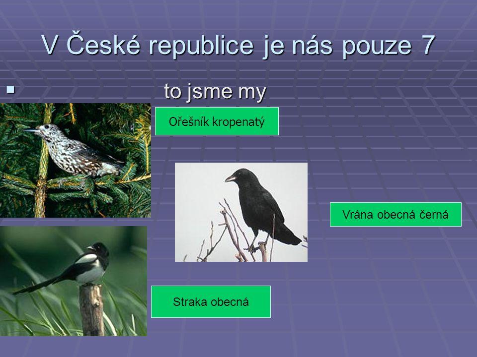 V České republice je nás pouze 7  to jsme my Ořešník kropenatý. Straka obecná Vrána obecná černá