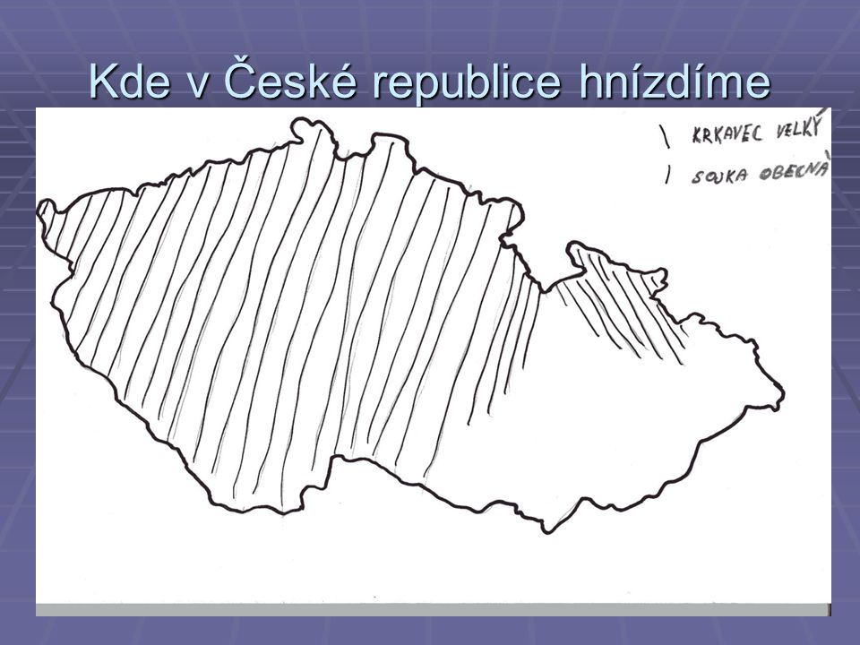 Kde v České republice hnízdíme  /krkavec I sojka
