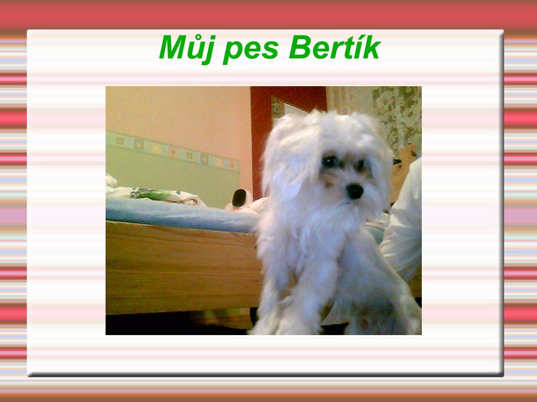 Něco o mém psíkovi  Je to maltézský psík  Je bílé barvy  Je malý ale roztomilý  Je dlouhosrstý ale my ho stříháme  Je velice učenlivý