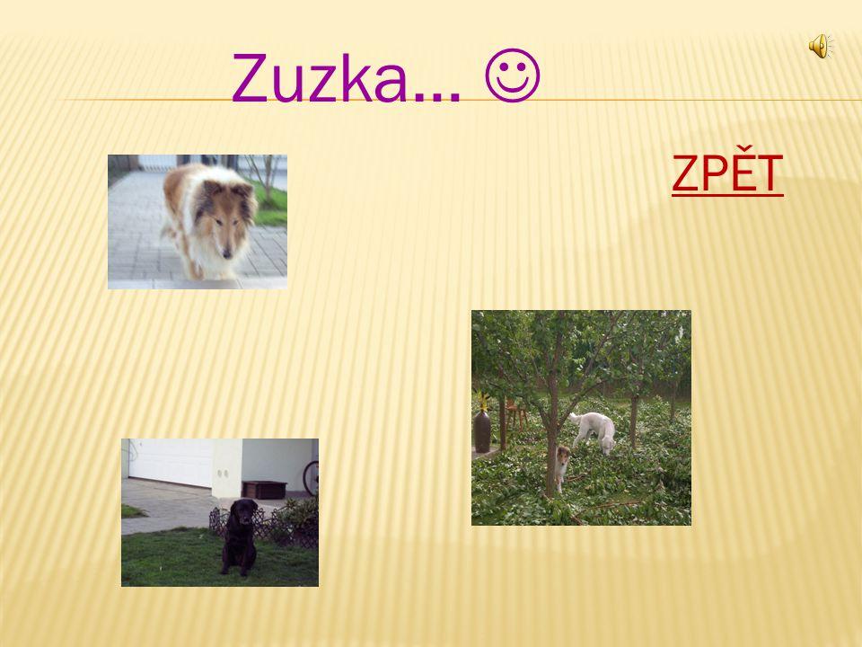 Zuzka… ZPĚT