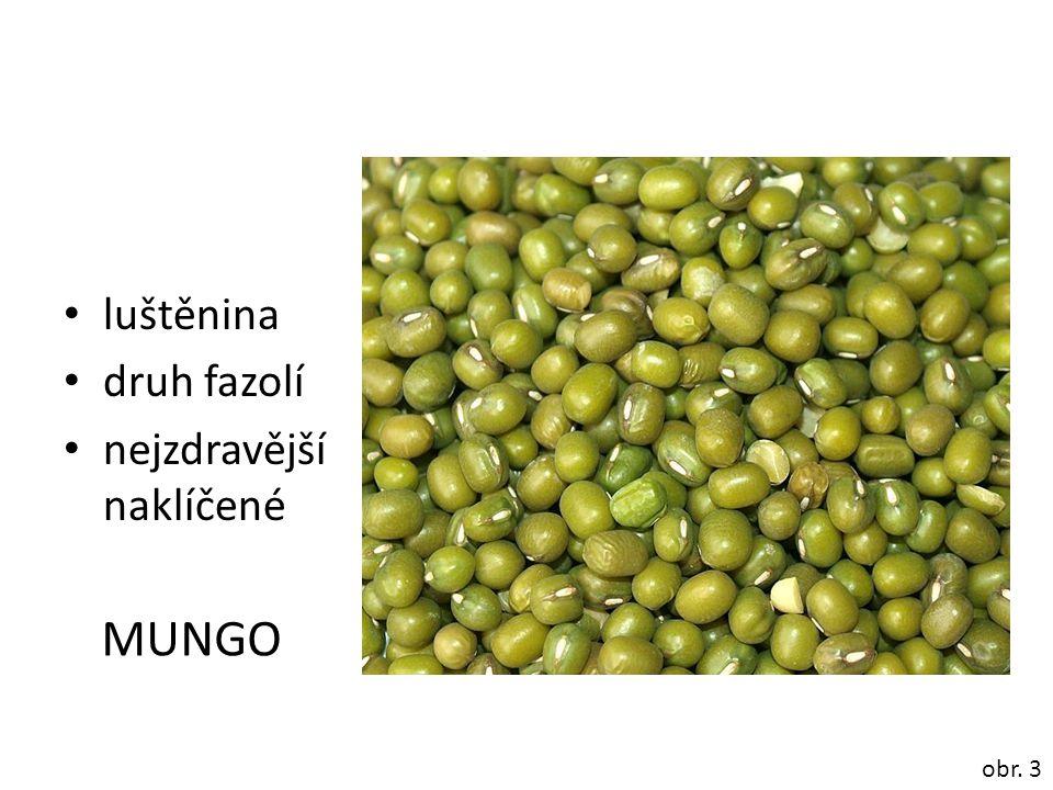 luštěnina druh fazolí nejzdravější naklíčené obr. 3 MUNGO