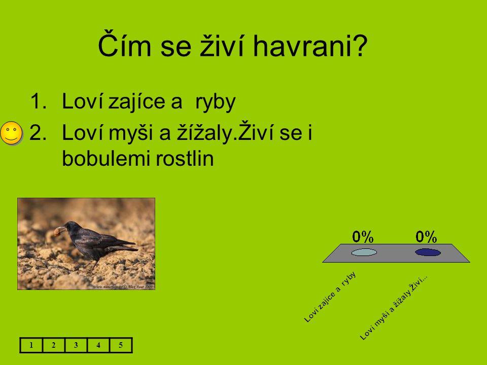 Čím se živí havrani? 12345 1.Loví zajíce a ryby 2.Loví myši a žížaly.Živí se i bobulemi rostlin