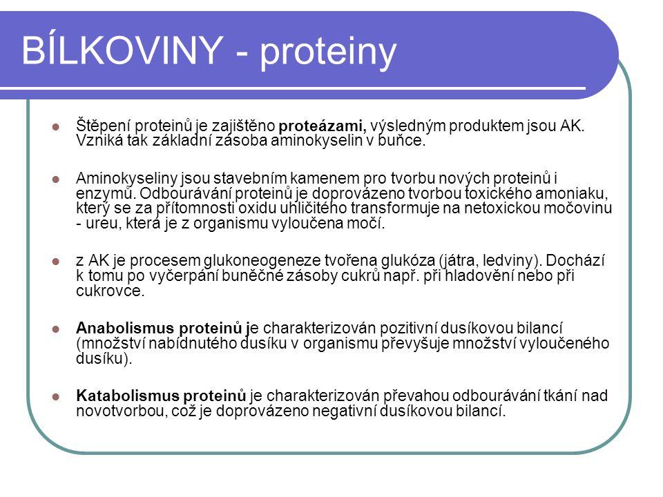 BÍLKOVINY - proteiny Štěpení proteinů je zajištěno proteázami, výsledným produktem jsou AK. Vzniká tak základní zásoba aminokyselin v buňce. Aminokyse