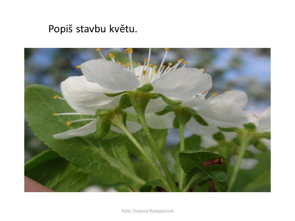 Popiš stavbu květu. Foto: Svatava Rozsypalová