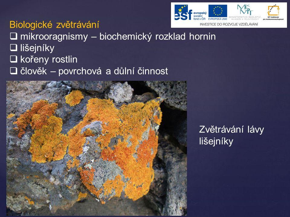 Biologické zvětrávání  mikrooragnismy – biochemický rozklad hornin  lišejníky  kořeny rostlin  člověk – povrchová a důlní činnost Zvětrávání lávy
