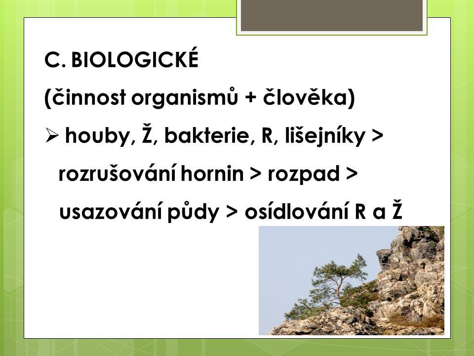 C.BIOLOGICKÉ (činnost organismů + člověka)  houby, Ž, bakterie, R, lišejníky > rozrušování hornin > rozpad > usazování půdy > osídlování R a Ž