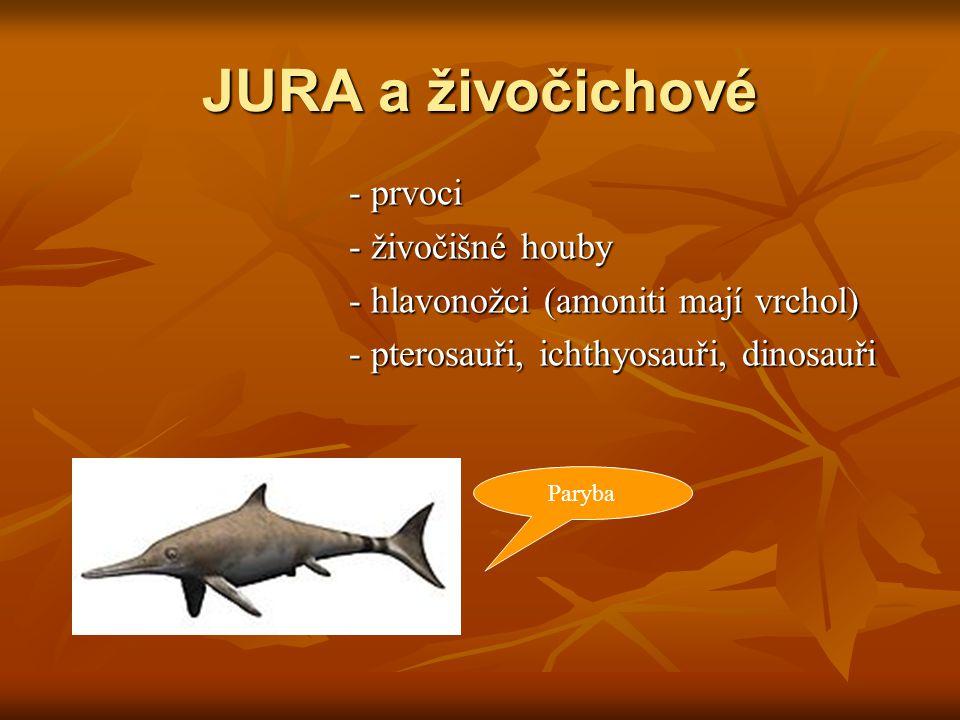JURA a živočichové - prvoci - živočišné houby - hlavonožci (amoniti mají vrchol) - pterosauři, ichthyosauři, dinosauři Paryba