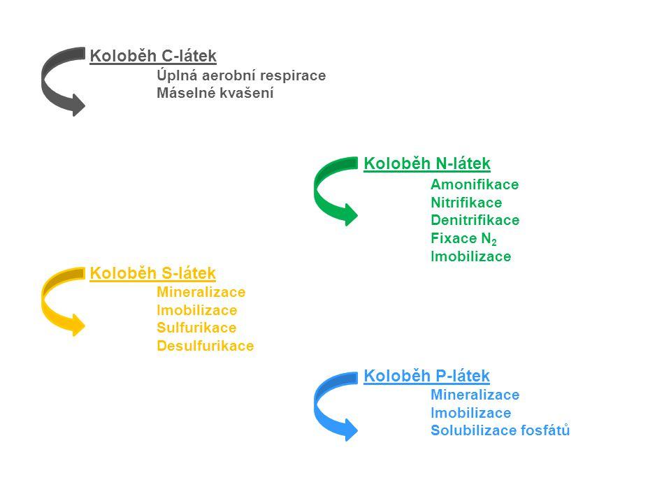 Koloběh C-látek Úplná aerobní respirace Máselné kvašení Koloběh S-látek Mineralizace Imobilizace Sulfurikace Desulfurikace Koloběh N-látek Amonifikace Nitrifikace Denitrifikace Fixace N 2 Imobilizace Koloběh P-látek Mineralizace Imobilizace Solubilizace fosfátů