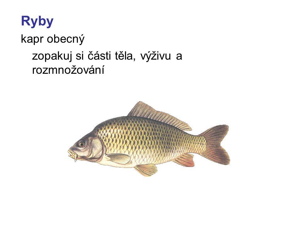 Ryby kapr obecný zopakuj si části těla, výživu a rozmnožování