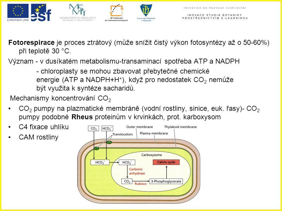 Fotorespirace je proces ztrátový (může snížit čistý výkon fotosyntézy až o 50-60%) při teplotě 30 °C. Význam - v dusíkatém metabolismu-transaminací sp
