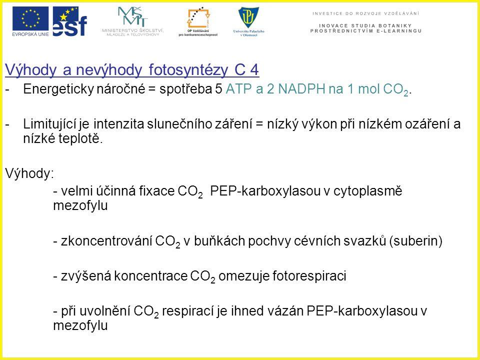 Výhody a nevýhody fotosyntézy C 4 -Energeticky náročné = spotřeba 5 ATP a 2 NADPH na 1 mol CO 2. -Limitující je intenzita slunečního záření = nízký vý