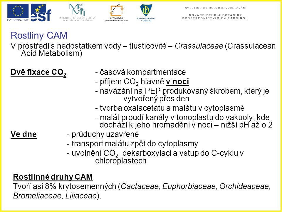 Rostliny CAM V prostředí s nedostatkem vody – tlusticovité – Crassulaceae (Crassulacean Acid Metabolism) Dvě fixace CO 2 - časová kompartmentace - pří