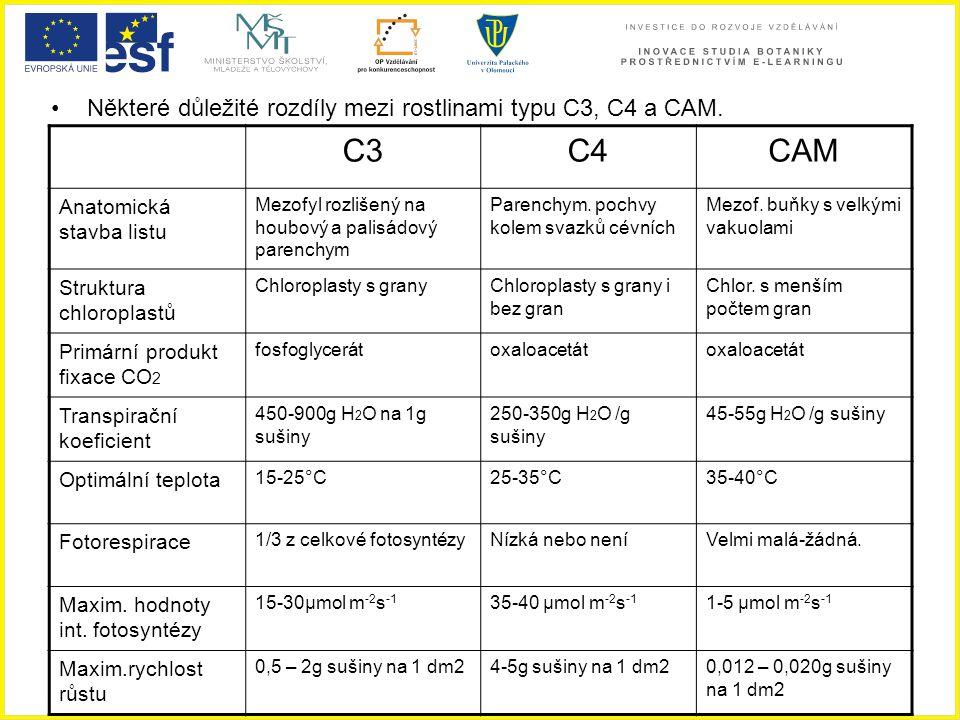 Některé důležité rozdíly mezi rostlinami typu C3, C4 a CAM. C3C4CAM Anatomická stavba listu Mezofyl rozlišený na houbový a palisádový parenchym Parenc