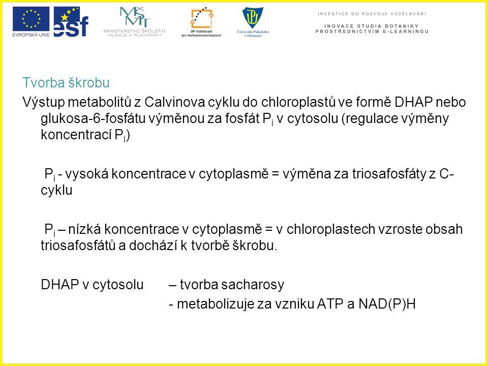 Tvorba škrobu Výstup metabolitů z Calvinova cyklu do chloroplastů ve formě DHAP nebo glukosa-6-fosfátu výměnou za fosfát P i v cytosolu (regulace výmě