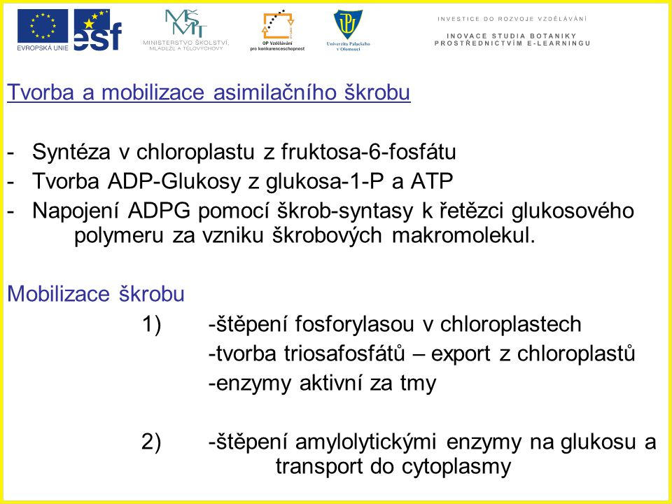 Tvorba a mobilizace asimilačního škrobu -Syntéza v chloroplastu z fruktosa-6-fosfátu -Tvorba ADP-Glukosy z glukosa-1-P a ATP -Napojení ADPG pomocí škr