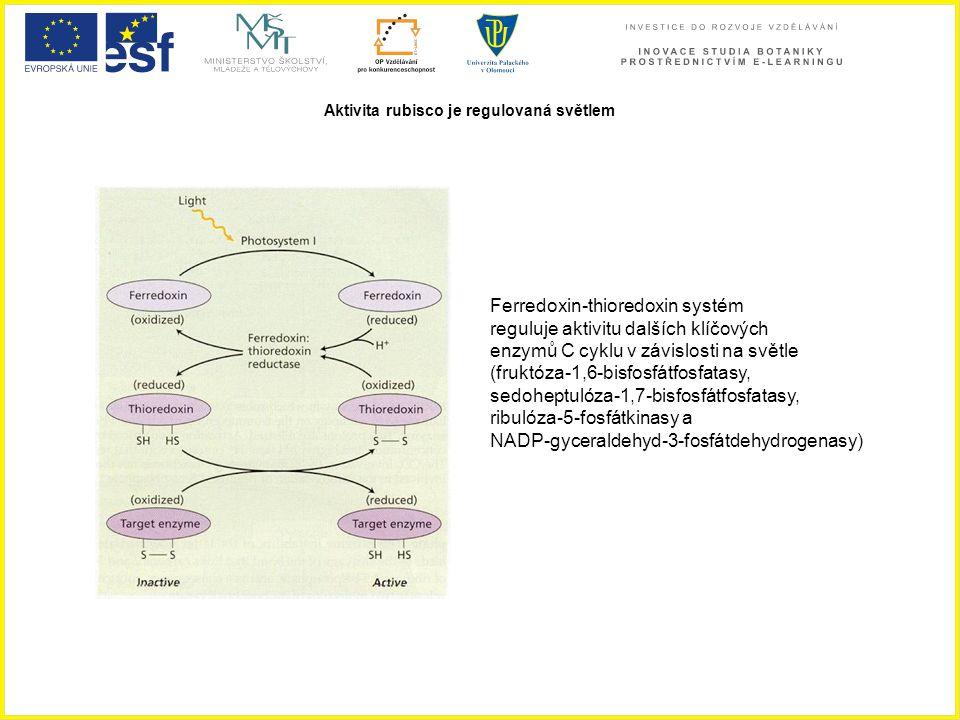 Aktivita rubisco je regulovaná světlem Ferredoxin-thioredoxin systém reguluje aktivitu dalších klíčových enzymů C cyklu v závislosti na světle (fruktó