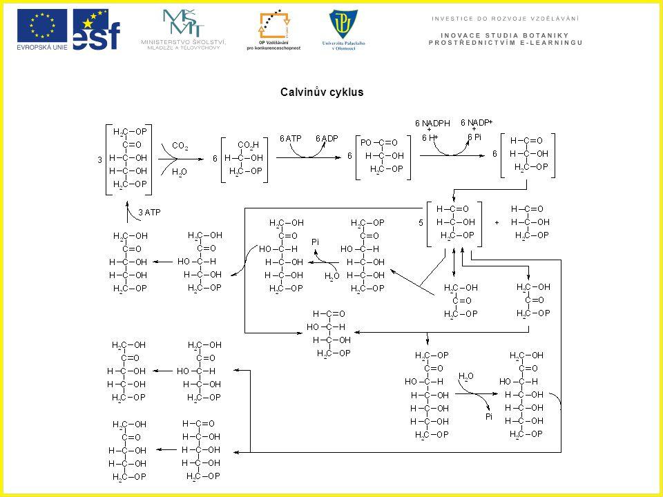 Calvinův cyklus