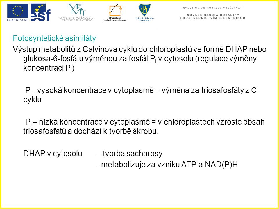 Fotosyntetické asimiláty Výstup metabolitů z Calvinova cyklu do chloroplastů ve formě DHAP nebo glukosa-6-fosfátu výměnou za fosfát P i v cytosolu (re