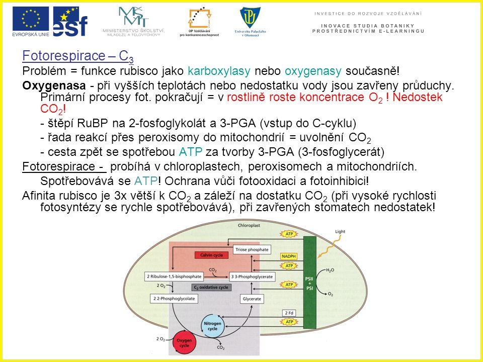 Fotorespirace – C 3 Problém = funkce rubisco jako karboxylasy nebo oxygenasy současně! Oxygenasa - při vyšších teplotách nebo nedostatku vody jsou zav