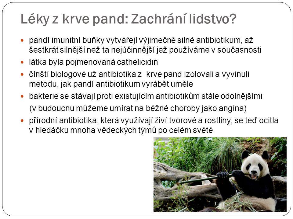 Léky z krve pand: Zachrání lidstvo.