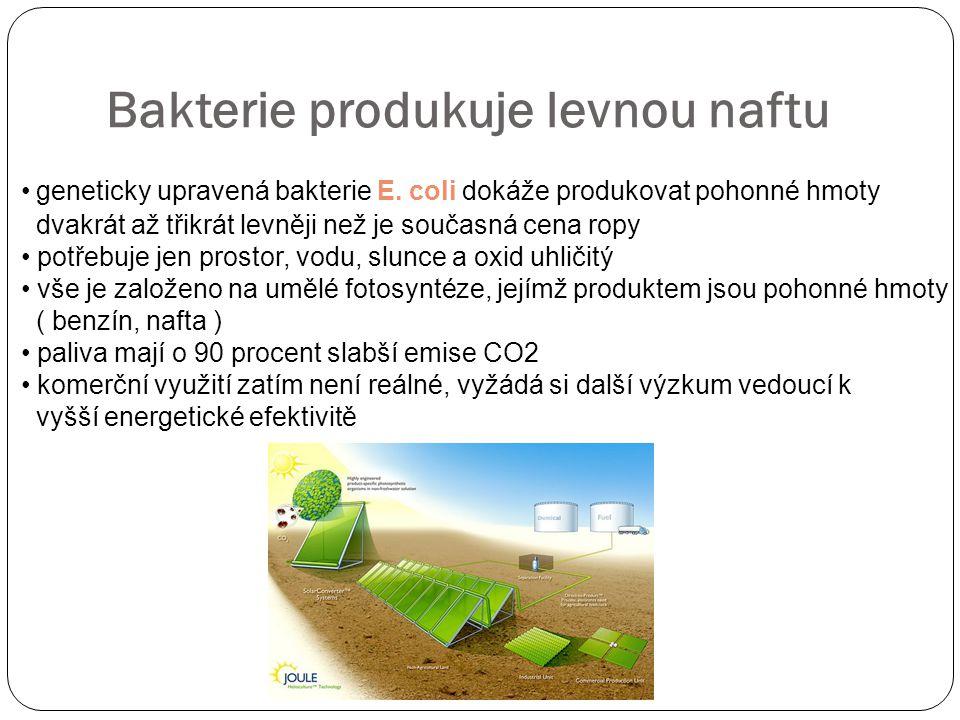 Bakterie produkuje levnou naftu geneticky upravená bakterie E.