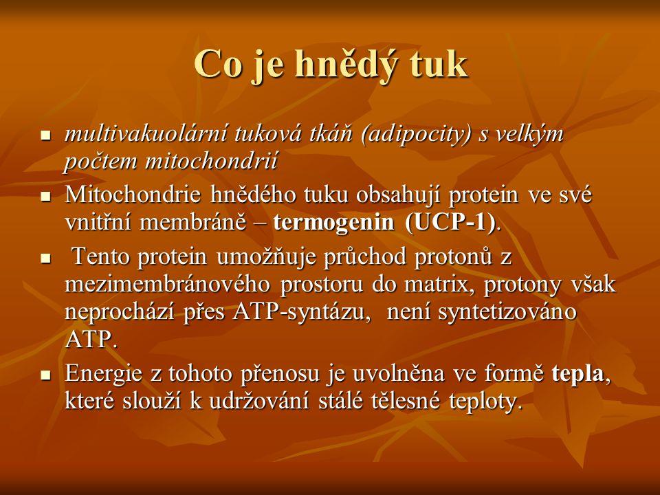 Co je hnědý tuk multivakuolární tuková tkáň (adipocity) s velkým počtem mitochondrií multivakuolární tuková tkáň (adipocity) s velkým počtem mitochond