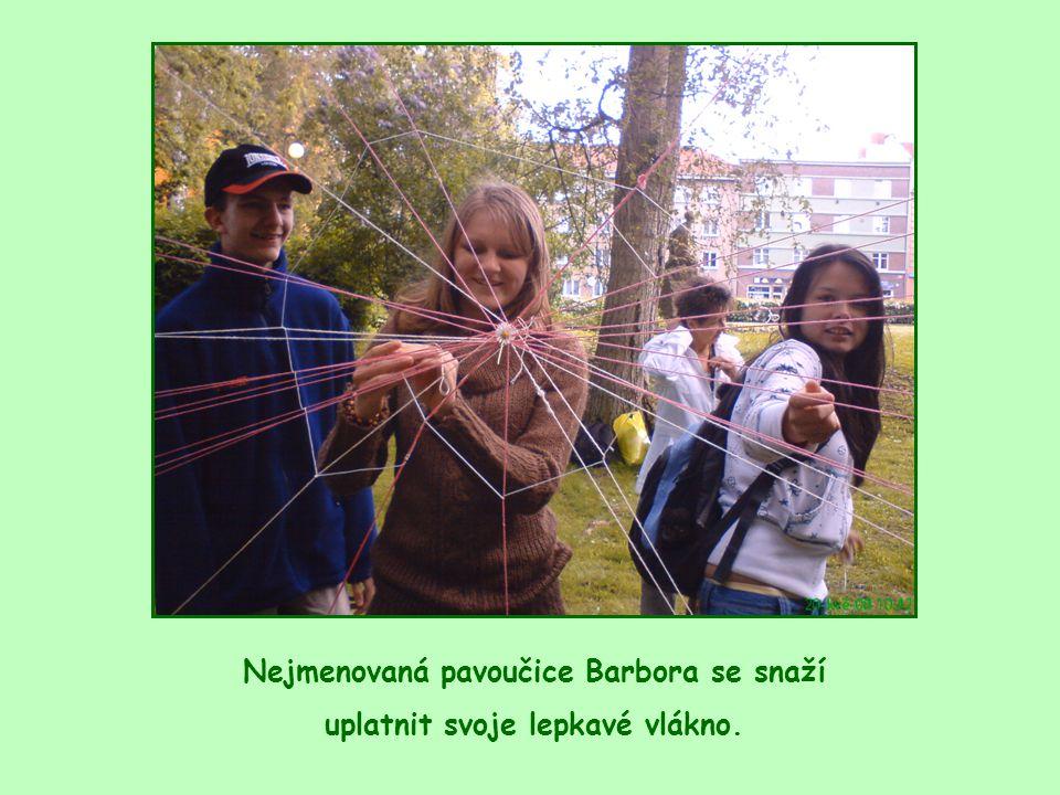 Nejmenovaná pavoučice Barbora se snaží uplatnit svoje lepkavé vlákno.