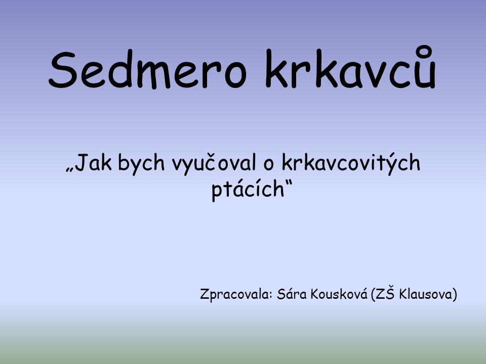 """Sedmero krkavců """"Jak bych vyučoval o krkavcovitých ptácích"""" Zpracovala: Sára Kousková (ZŠ Klausova)"""