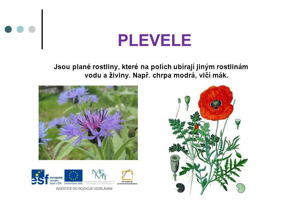 PLEVELE Jsou plané rostliny, které na polích ubírají jiným rostlinám vodu a živiny. Např. chrpa modrá, vlčí mák.