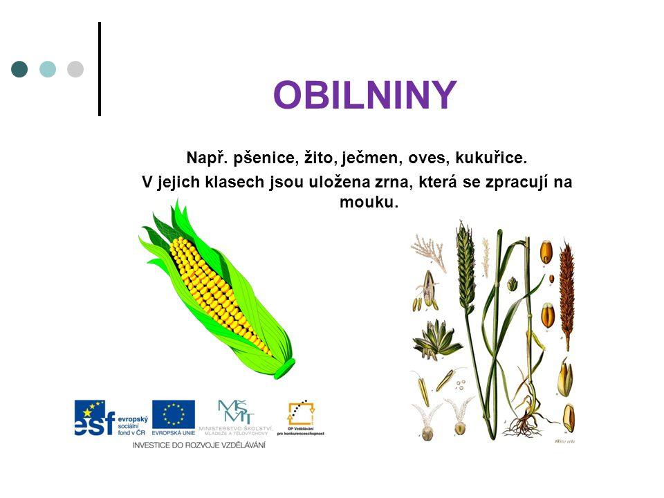 OBILNINY Např. pšenice, žito, ječmen, oves, kukuřice. V jejich klasech jsou uložena zrna, která se zpracují na mouku.