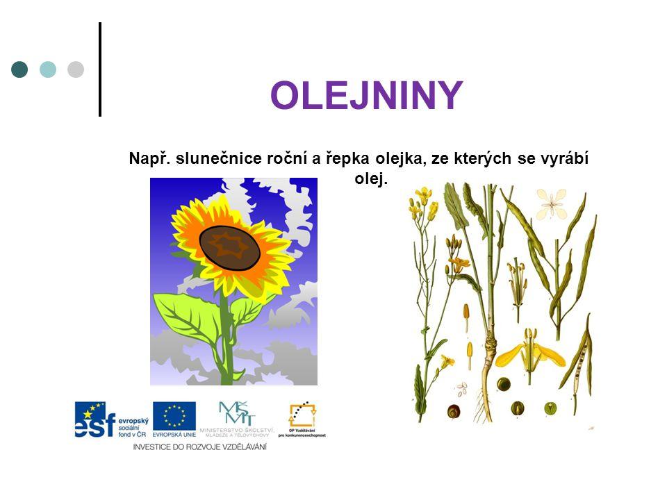 OLEJNINY Např. slunečnice roční a řepka olejka, ze kterých se vyrábí olej.