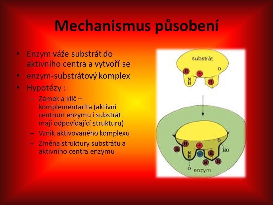 Mechanismus působení Enzym váže substrát do aktivního centra a vytvoří se enzym-substrátový komplex Hypotézy : – Zámek a klíč – komplementarita (aktivní centrum enzymu i substrát mají odpovídající strukturu) – Vznik aktivovaného komplexu – Změna struktury substrátu a aktivního centra enzymu