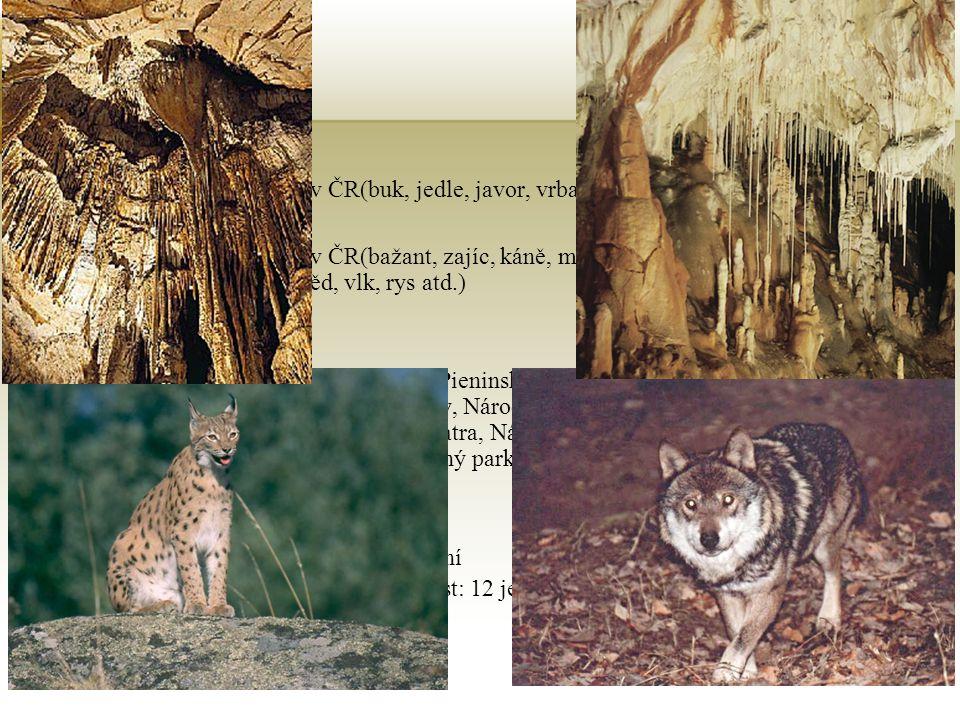 Příroda Vegetace Stejná jako v ČR(buk, jedle, javor, vrba, olše atd.) Živočišstvo Stejné jako v ČR(bažant, zajíc, káně, muflon, ježek, jelen, medvěd,