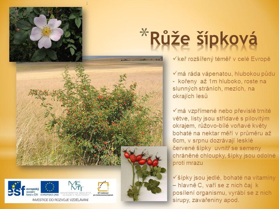 ] Šípky (latinský název pro toto léčivo je Fructus cynosbati) jsou souplodí nažek (plody růže jsou totiž nažky). Mají vysokou hodnotu vitamínu C a A,