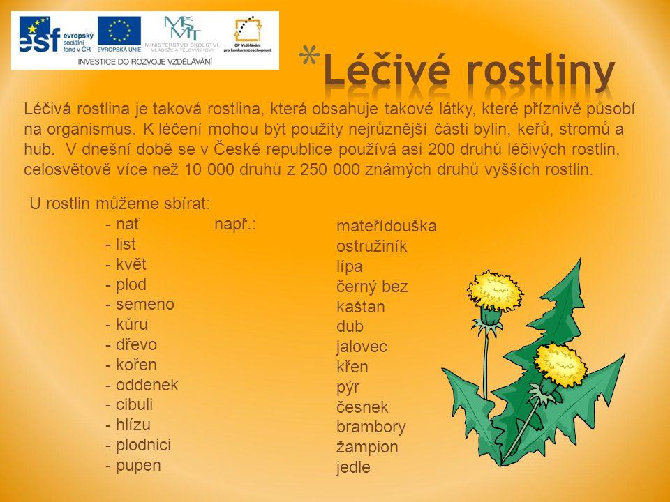 600 let stará lípa v Lipce u Horního Bradla též lípa malolistá, je statný opadavý listnatý strom s košatou korunou dorůstající 30 a více metrů vyskytuje se prakticky po celém území ČR, listnaté a smíšené lesy, uměle se vysazuje v alejích a parcích listy jsou srdčité, květy jsou žlutavě bílé a v době květu – červen, červenec – omamně voní, plod je kulovitý oříšek je to velmi užitečný strom – okrasný, stínící, medonosný, symbolický, má měkké a lehké dřevo (řezbářství), léčitelství sbírá se květ i s listenem – lipový čaj při nachlazení a kašli, potíže s ledvinami, trávícím ústrojím aj.